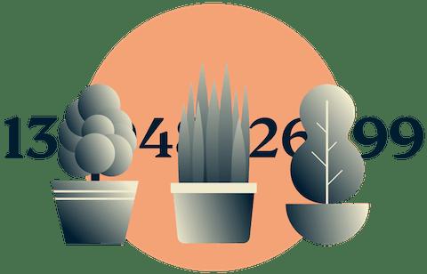 Vermom uw IP adres: Planten in pot die een IP adres verbergen.