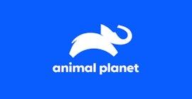 Animal Planetのロゴ。